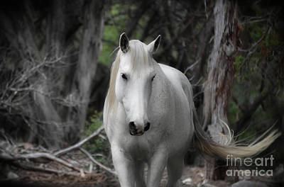 Photograph - Horse With No Name by Peggy Franz
