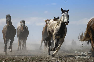 Horses Photograph - Horse With No Name by Wildlife Fine Art
