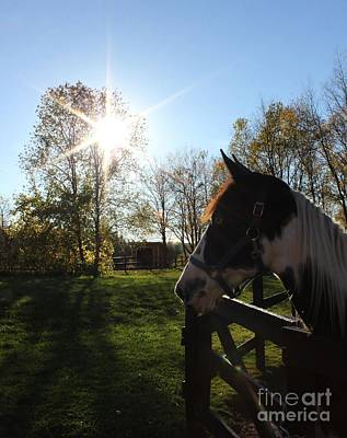 Photograph - Horse With Sunburst by Janice Byer