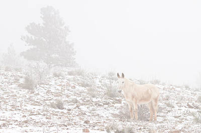 Winter Photograph - Horse With Winter Season Snow And Fog by James BO  Insogna