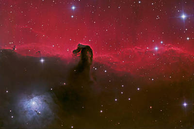 Photograph - Horsehead Nebula by Brian Peterson