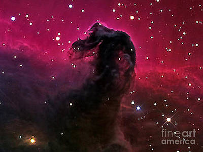 Photograph - Horsehead Nebula From Nasa by Merton Allen
