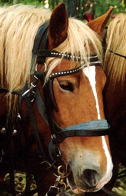 Halloween Movies - Horse in Harness by Susan Buscho