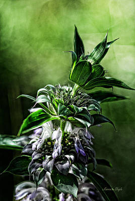 Art Print featuring the photograph Horsemint by Karen Slagle