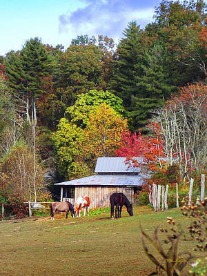 Photograph - Horses And Barn In The Fall by Duane McCullough