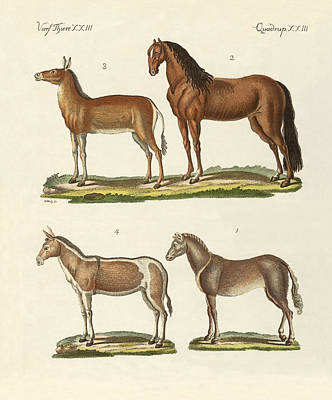 Wild Horses Drawing - Horses And Donkeys by Splendid Art Prints