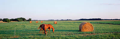 Southern Illinois Photograph - Horses And Hay, Marion County by Panoramic Images