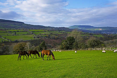 Thoroughbred Farm Photograph - Horses And Sheep In The Barrow Valley by Panoramic Images