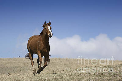 Animals Photograph - Horses-animals-7 by Wildlife Fine Art