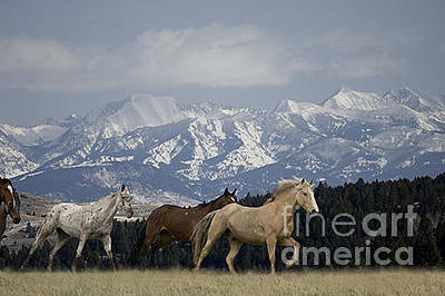 Horse Photograph - Horses-animals-9 by Wildlife Fine Art