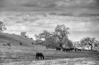 Photograph - Horses Around Oak Trees by Judith Barath
