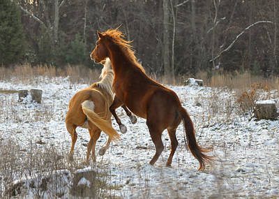 Horses At Play - 10dec5690b Art Print