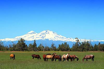 Horses At Sisters Mountain Art Print by Lynn Hopwood