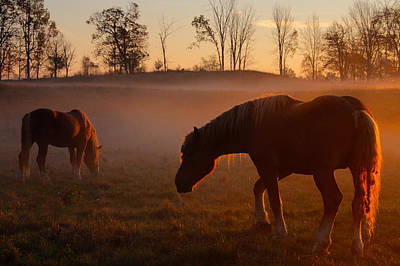 Photograph - Horses At Sunrise by Jim Vance