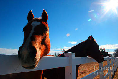 Photograph - Horses At The Fence by Martha Burton