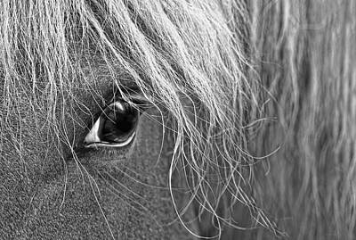 Photograph - Horse's Eye Monochrome by Jennie Marie Schell