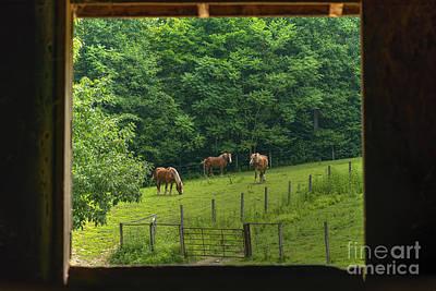 Horses Feeding In Field Art Print by Dan Friend