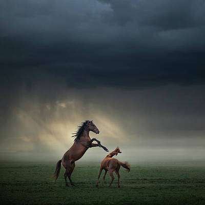 Struggling Photograph - Horses Fight by H?seyin Ta?k?n