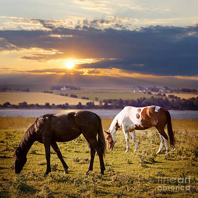 Animals Photos - Horses grazing at sunset by Elena Elisseeva
