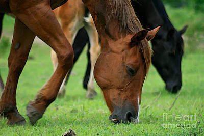 Mixed Media - Horses Grazing by E B Schmidt