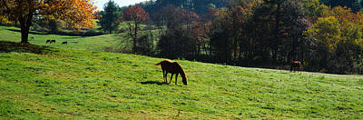 Horses Grazing In A Field, Kent County Art Print by Panoramic Images