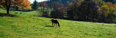 Horses Grazing In A Field, Kent County Art Print