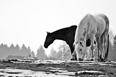Horses Grazing Art Print