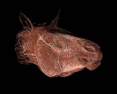 3-d Photograph - Horse's Head by Anders Persson, Cmiv