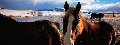 Horses In A Field, Montana, Usa Art Print by Panoramic Images