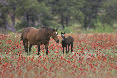 Wildflowers In Texas Photograph - Horses In A Field Of Texas Wildflowers 2 by Rob Greebon