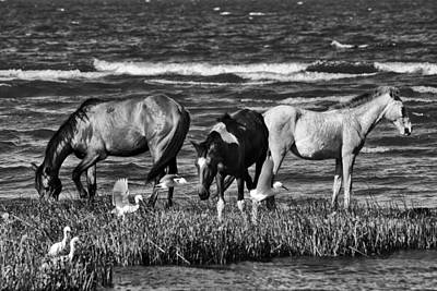 Photograph - Horses In Black And White by William Shevchuk