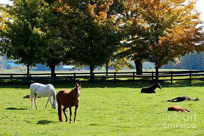 Horses In Fall Art Print
