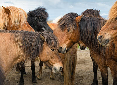 Photograph - Horses In Iceland by Matthias Hauser