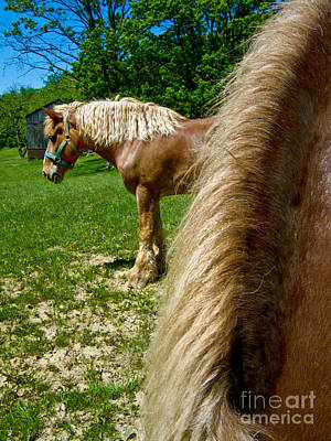 Horses In Meadow Print by Amy Cicconi