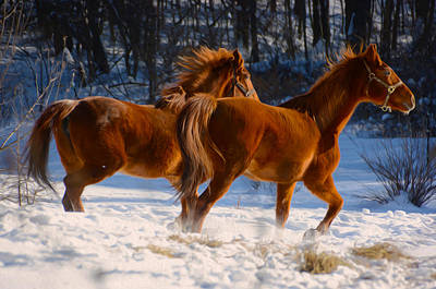 Horses In Motion Art Print