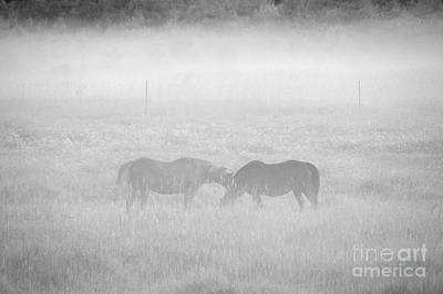 Photograph - Horses In The Fog by Cheryl Baxter