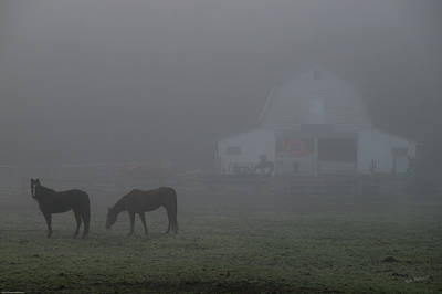 Photograph - Horses In The Fog by Mick Anderson