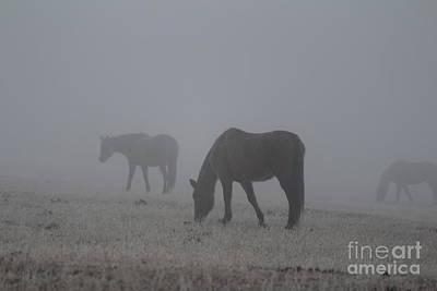 Photograph - Horses In The Morning Fog by Ann E Robson