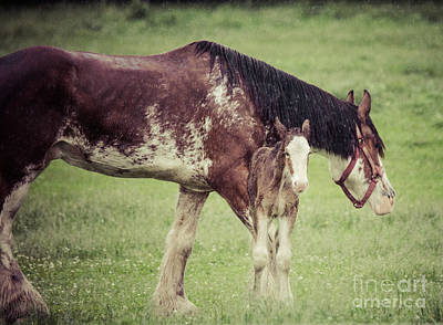 Photograph - Horses In The Rain by Cheryl Baxter