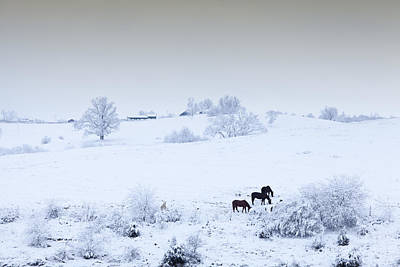 Photograph - Horses In The Snow by Alexey Stiop