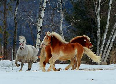 Photograph - Horses In The Snow by Elaine Franklin