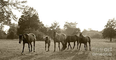 Horses In The Sun Art Print