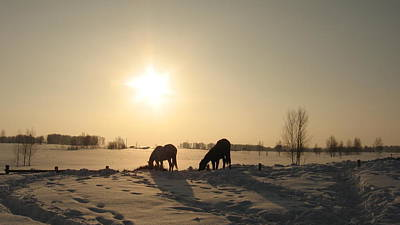 Horse In The Run Photograph - Horses In Winter by Zina Stromberg