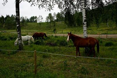 Photograph - Horses by Jeanette Rode Dybdahl