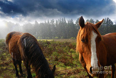Photograph - Horses Life by Sandro Rossi