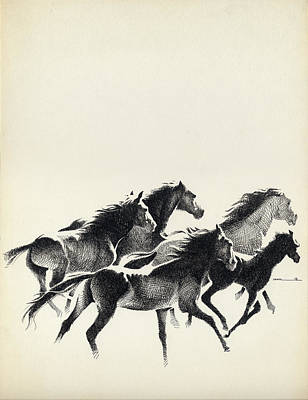 Drawing - Horses by Mamoun Sakkal