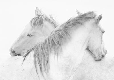 White Horse Wall Art - Photograph - Horses by Marie-anne Stas