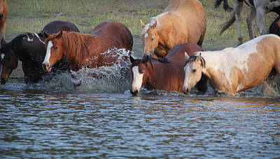 Photograph - Horses N Water by Diane Bohna