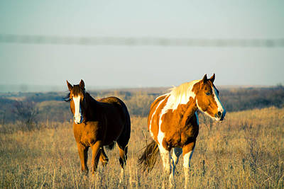 Photograph - Horses  by Nathan Hillis