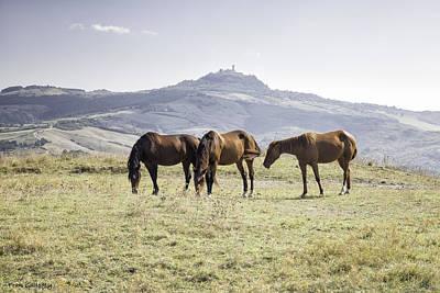Photograph - Horses Near Mt. Amiata by Fran Gallogly